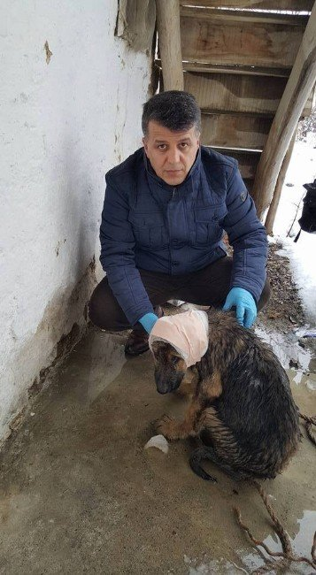 Hakkari'ye Hayvan Barınağı Talebi
