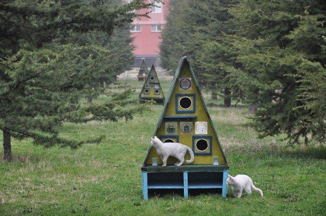 İnegöl Belediyesi'nden Kedi Evleri