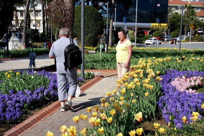 Alanya'da Laleler Çiçek Açtı