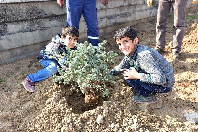 Battalgazi Belediyesi Fidanları Toprakla Buluşturuyor