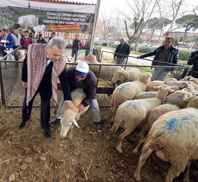 İzmir Büyükşehir Belediyesi üreticiye ücretsiz bin 174 hayvan dağıttı
