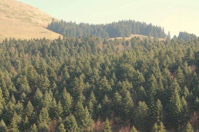 Türkiye'deki Ormanların Ekonomik Değeri Araştırıldı