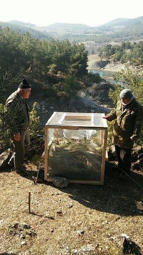 Vezirköprü Ormanlarında Böcek Operasyonu