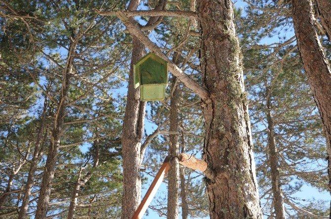 Ormandaki Kuşlara Ev Yapımı Yem
