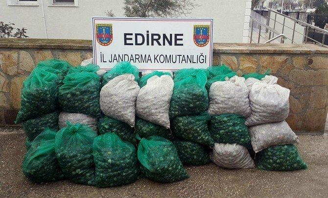 Edirne'de Midye Kaçakçılığı