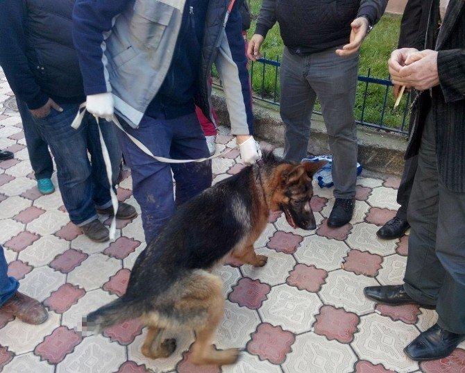 Köpeğe Eziyete Vatandaştan Tepki