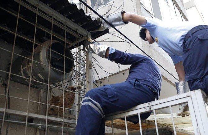 Dikenli Tellere Takılan Kedi İtfaiye Ekiplerince Kurtarıldı