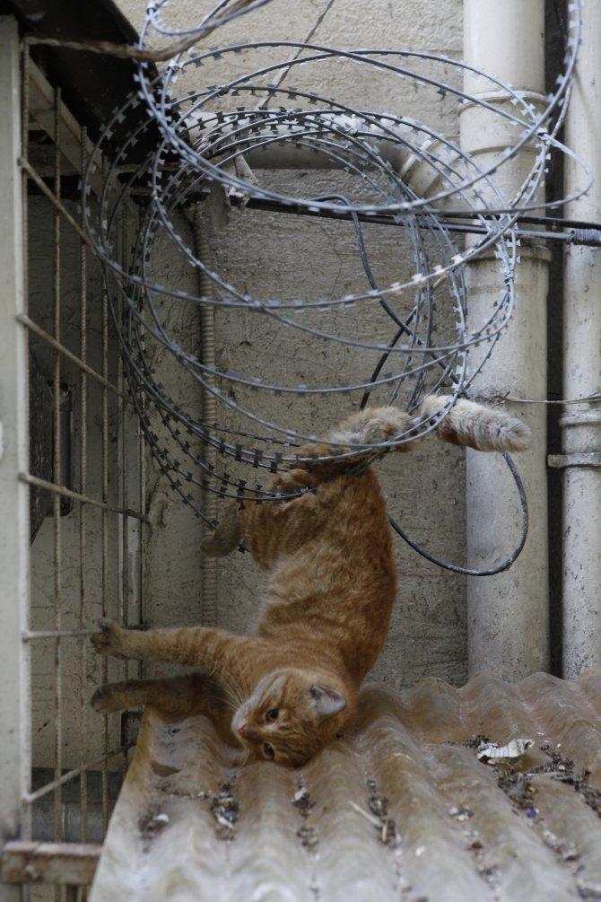 Mersin itfaiyesinden kedi kurtarma operasyonu
