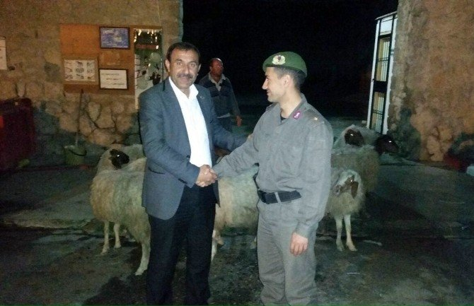 Tarsus'ta Çalınan Koyunlar Bulundu