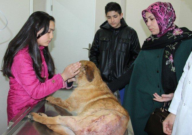 Yaralı Köpek Tedavisinin Ardından Sahibine Kavuştu