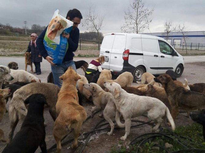 Aç kalan köpeklere hayvanseverler sahip çıktı