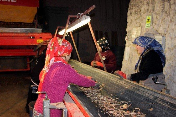 Çiftçinin Elinde 600 Bin Ton Patates Kaldı