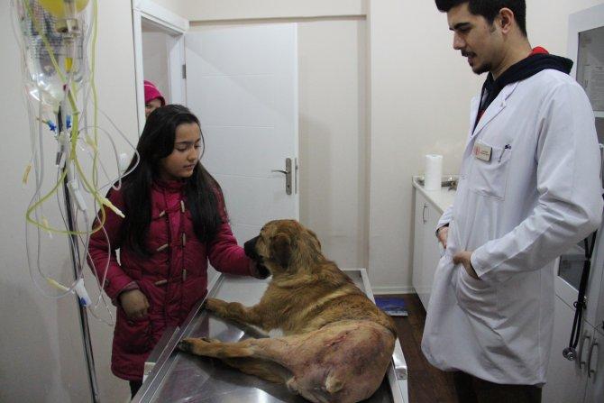 Köpeğini kurtarana teşekkür etti, çarpıp kaçan sürücüye ise kızdı