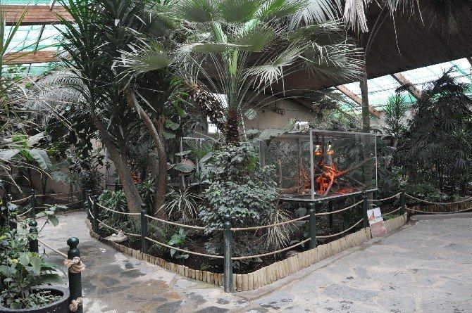 Hayvanat Bahçesini 8 Bin Bitki İle Yağmur Ormanına Çevirdiler
