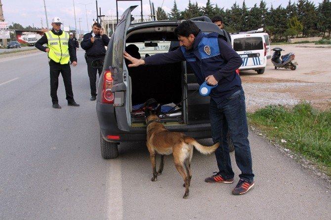 Narkotik Köpekleri Didim'de Görev Başında