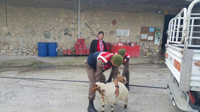Yenice'de hayvan hırsızlığı yapan şüphelileri yakalandı