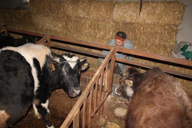 Görme engelli, hayvanlarına kendisi bakıyor