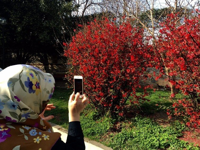 Bahar Çiçekleri Fotoğraf Sanatçılarını Coşturdu