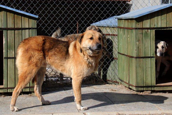 Çankaya Belediyesi 13 engelli, 104 yaşlı hayvana bakıyor