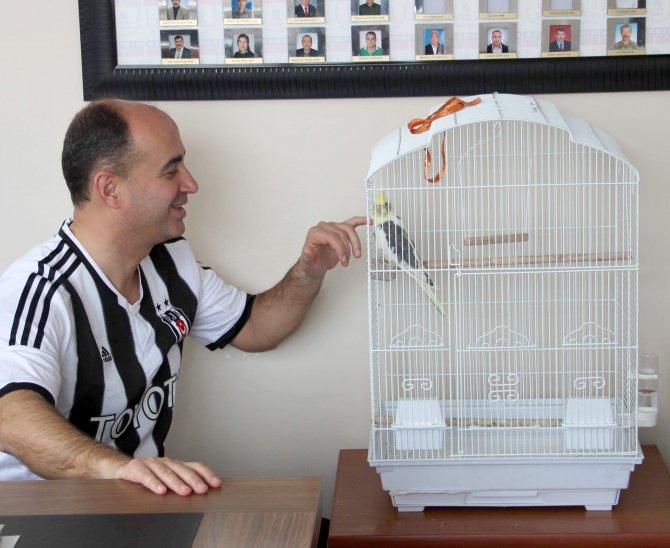 Fanatik Papağan Carlos: Kartal gol gol