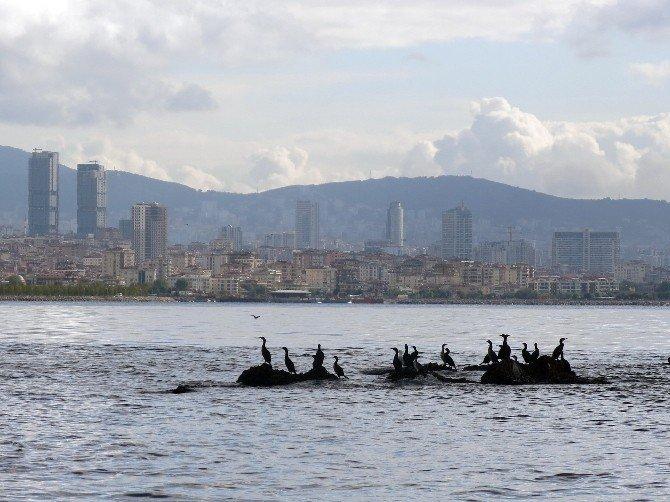 Kayıp Ada Vordonisi UNESCO Yolunda
