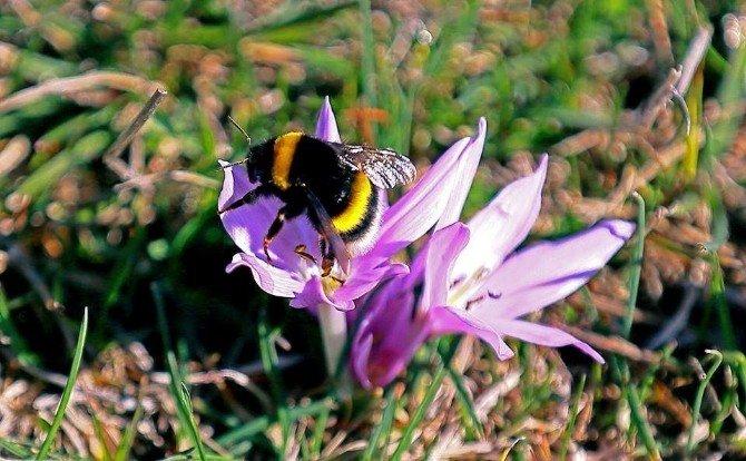 Keles'te Bahar Çiçekleri Erken Açtı