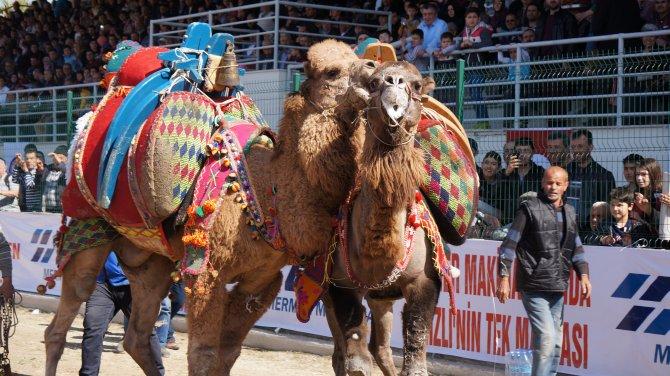 43 yıl sonra develer Denizlispor için güreşti