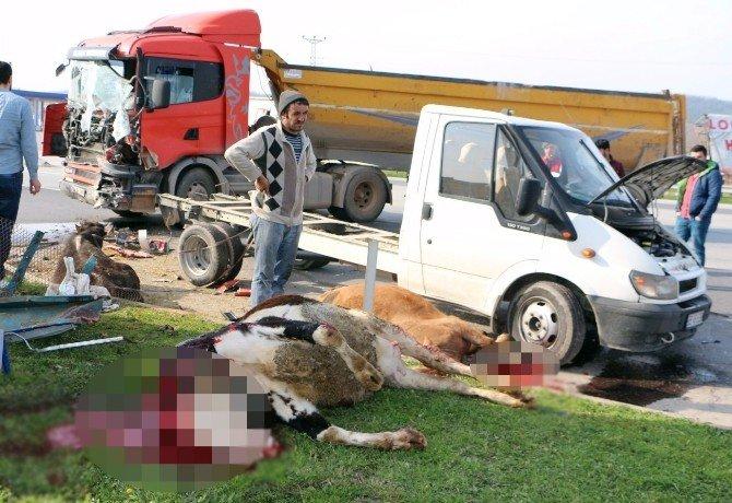 Sakarya'da Tır İle Kamyonet Çarpıştı: 1 Yaralı