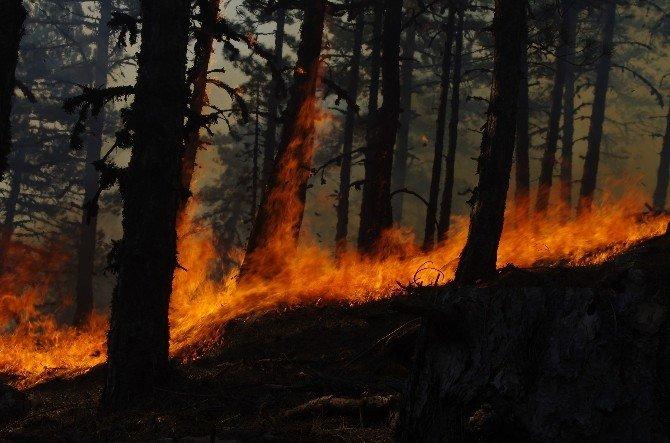 Karıncalı Dağı'nda 15 Hektar Çam Ormanı Kül Oldu