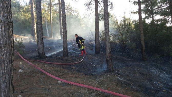 Bilecik'te yılın ilk orman yangını
