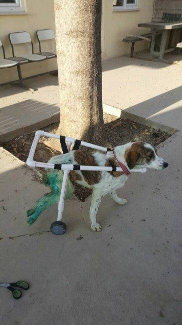 Sakat Köpeğe Özel Düzenek