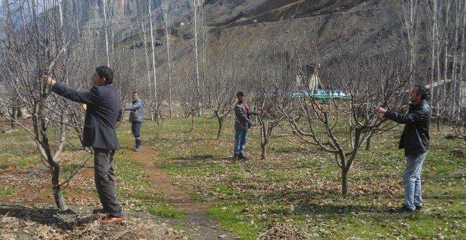 Sınırda Ağaç Budama Çalışması