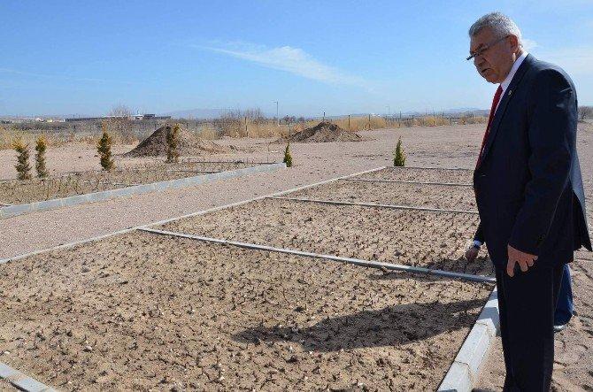 Nevşehir'in İlk Lale Bahçesi Gülşehir'de Yapıldı