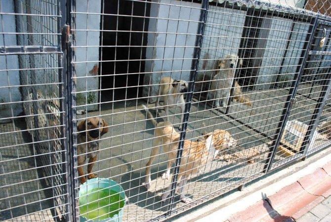 Ege'de 38 bin hayvan aşılandı