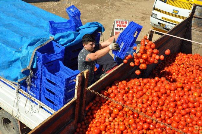 Rusya krizinin vurduğu domates 10 kuruştan salçaya gidiyor