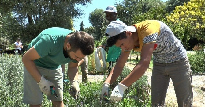 Gönüllü Bahçıvanlığa İlgi Giderek Artıyor