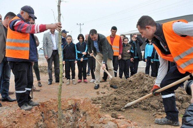 Ayvalık Belediyesi'nin Diktiği Çınarlar Küçükköy'ün Geleceği Olacak