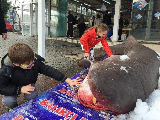 3,5 Metrelik Jaws'a Yoğun İlgi