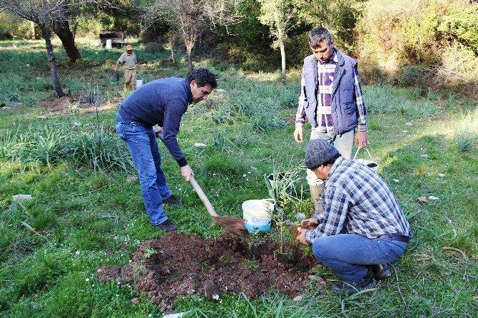 Muğla'nın Sakız Bahçeleri