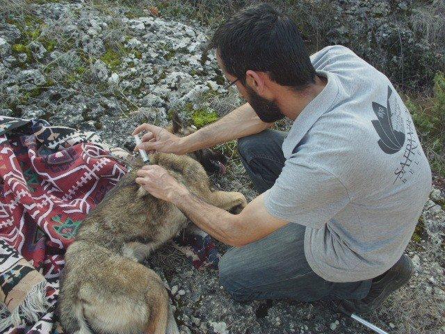 Kanyonda Mahsur Kalan Köpeği Belediye Ekipleri Kurtardı
