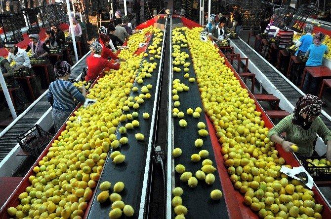 Gıda İhracatçıları Tanıtım Atağını Sürdürüyor