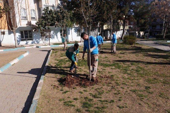 Yemyeşil Bir Haliliye İçin Ağaçlandırma Çalışması Başlatıldı