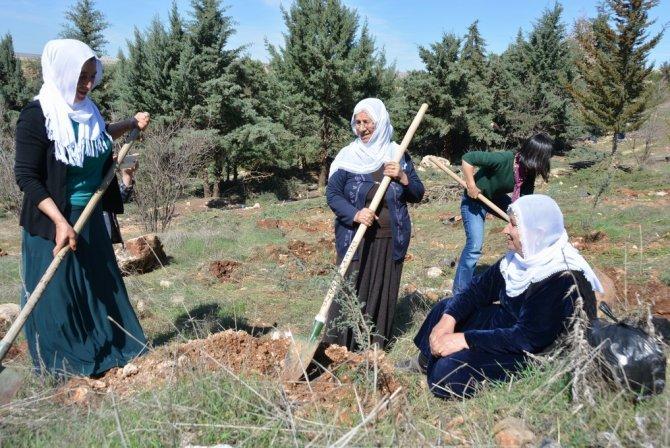 Nusaybinli kadınlar 8 Mart fidanı dikti