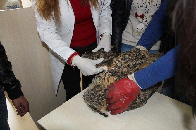Orman Ve Su İşleri Bakanlığı'ndan Yaban Hayvanlarına Şefkat Eli