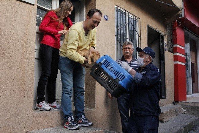 Konak'ta Sevimli Sokak Dostları Güvende