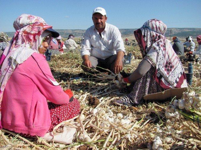 Tarımda Da Kadın İşçiler Daha Az Kazandı