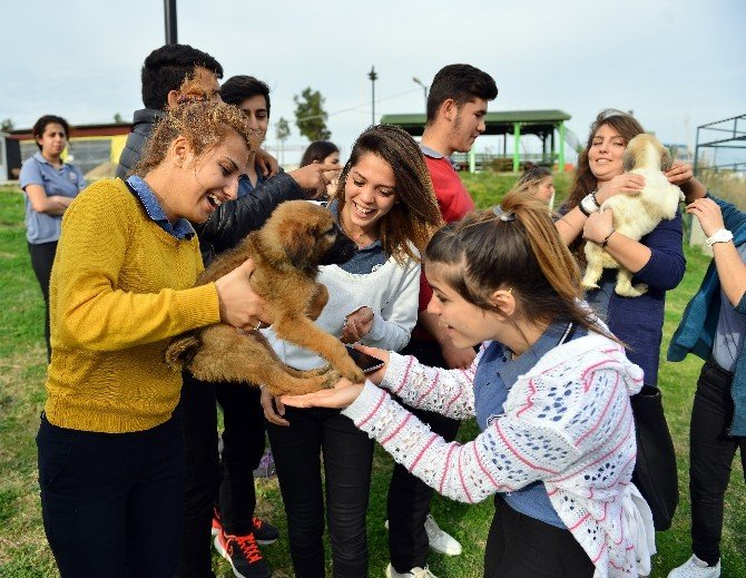 Lise Öğrencilerinden Muratpaşa Veterinerliğine Ziyaret