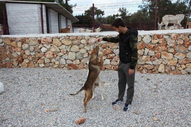 Bodrumsporlu Futbolcular Hayvan Barınağını Ziyaret ETİ