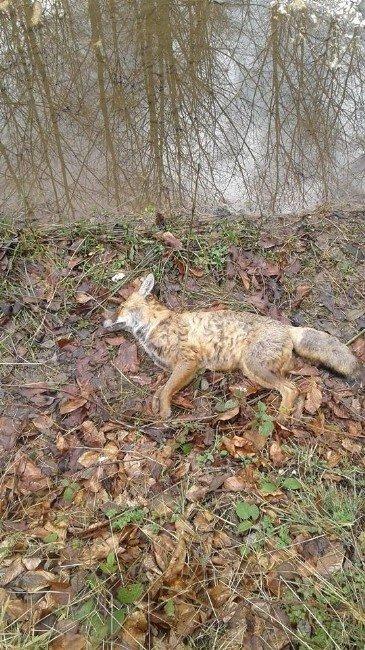 İnegöl'de Hayvan Katliamına Soruşturma