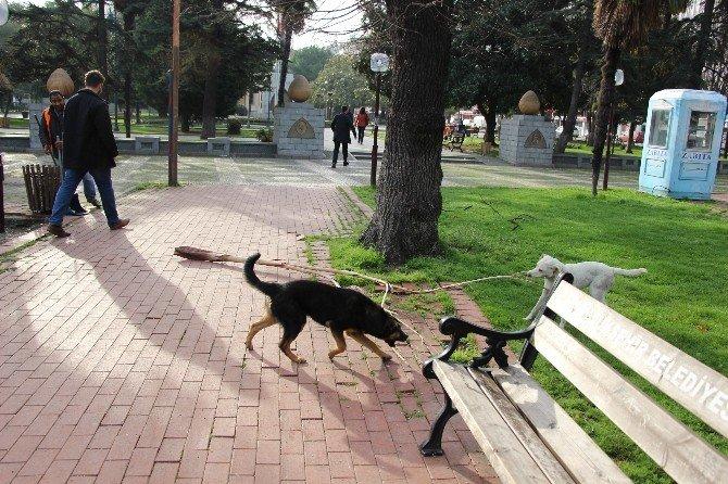 Köpeklerin Park Görevlisiyle İnatlaşması